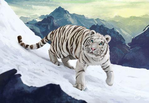 Обои Белый тигр в горах