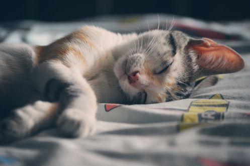 Обои Милый котенок спит на постели