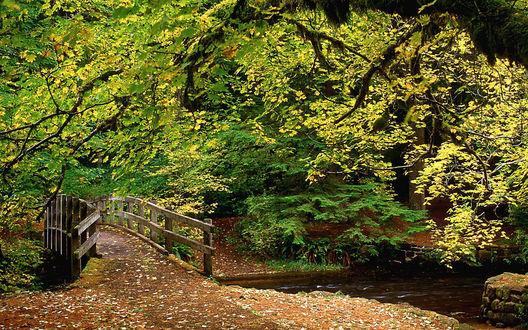 Обои Деревянный мостик над водоемом в осеннем парке