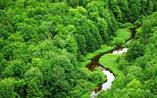 Обои Извилистый лесной ручей среди пышной растительности в Дикобраза, Национальный парк Мичиган / National Park Michigan