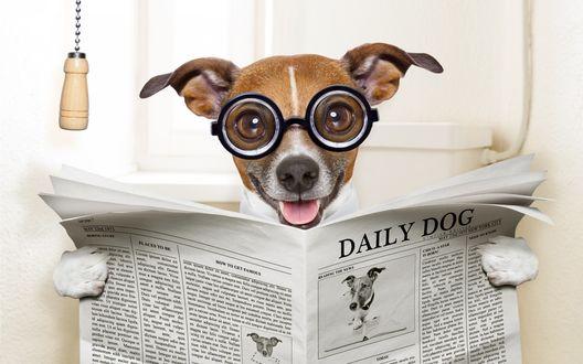 Обои Пес в очках, с открытым ртом, сидит в туалете и смотрит газету