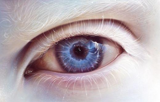 Обои Синий человеческий глаз альбиноса с белой бровью и белыми ресницами
