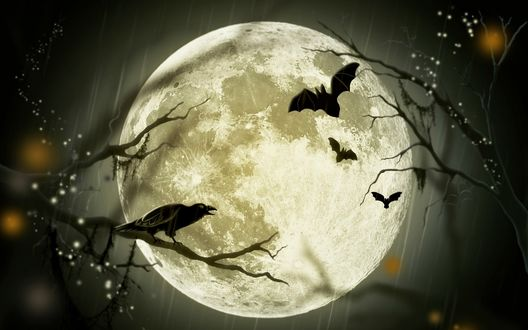 Обои Сидящий на дереве ворон и летающие летучие мыши на фоне луны