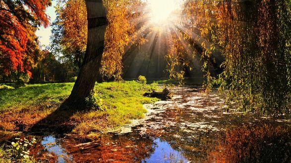 Обои Заросший пруд в осеннем парке