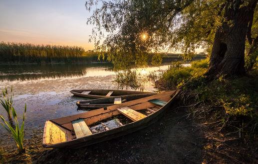 Обои Лодки у берега озера под старым деревом на фоне солнечного заката, фотограф Алтанец Андрей