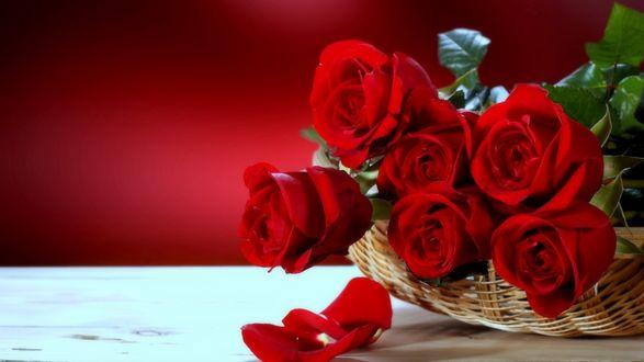Обои Ярко-красные розы с листьями в корзине на столе