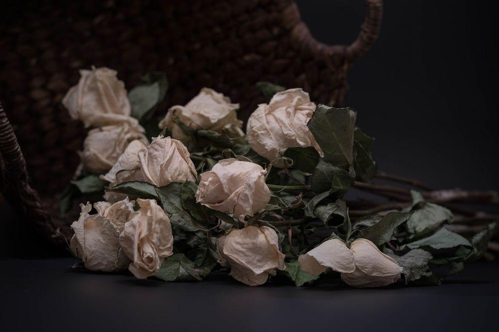 картинки разбросаны розы долго строили