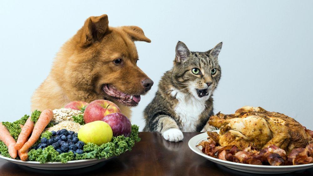Коты и собаки кино