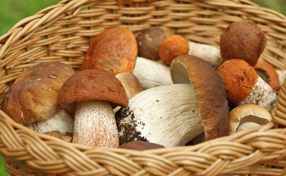 Обои Белые грибы и боровики в плетенной корзине на рабочий ...