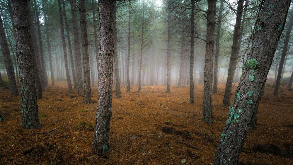 Рисунки животные в осеннем лесу