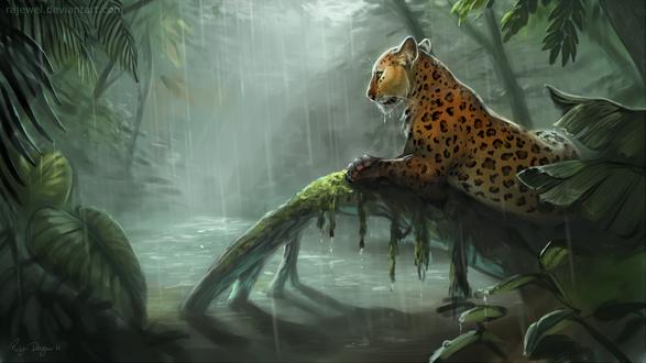 Обои Леопард в джунглях под дождем