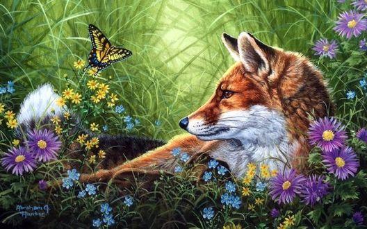 Обои Лиса лежит на поляне с цветами и с сидящей на цветке бабочкой