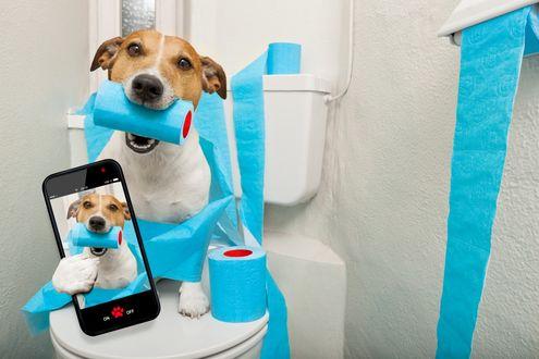 Обои Прикольный джек-рассел-терьер сидит на унитазе, держит в зубах рулон туалетной бумаги и в передней лапе смартфон со своим изображением, by Damedeeso