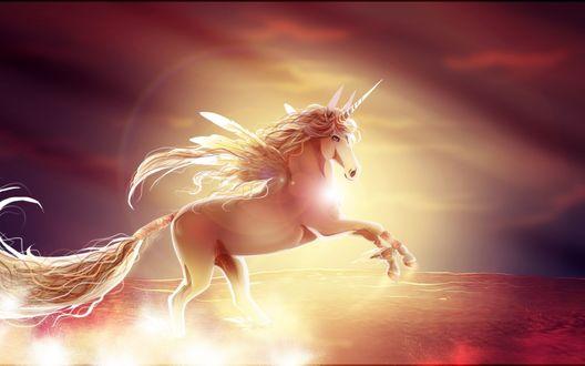 Обои Единорог с крыльями на фоне заката