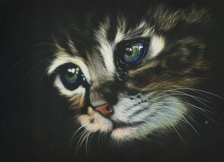 Обои Голубоглазый рисованный котенок, by shonechacko