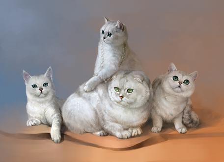 Обои Шотландские кошки, by SalamanDra-S