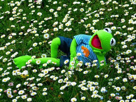 Обои Игрушечный лягушонок лежит на поляне с ромашками