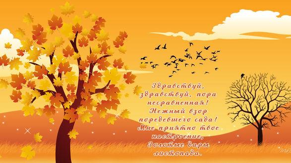 Обои Осеннее дерево с желтыми листьями, на небе летят птицы (Здравствуй, здравствуй, пора несравненная! Нежный взор поредевшего сада! Мне приятно твое настроение, Золотые дары листопада.)
