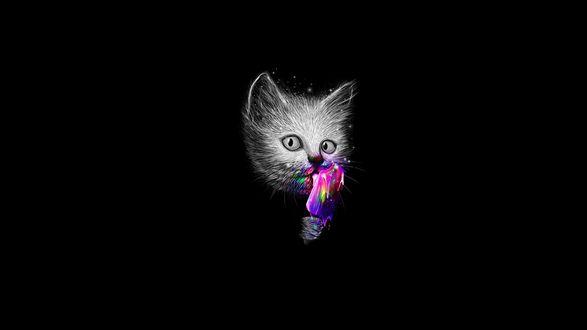 Обои Светлый котенок на черном фоне лижет цветное мороженое