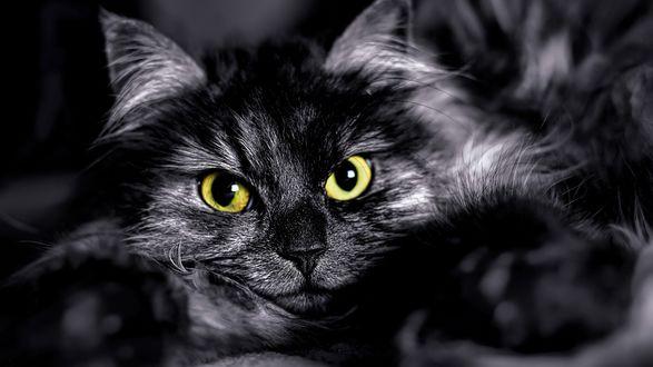 Обои Кошка с желтыми глазами