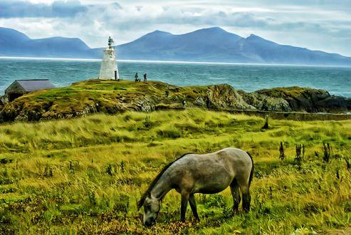 Обои Лошадь пасется на лугу на берегу моря, вдали виднеется маяк и горы