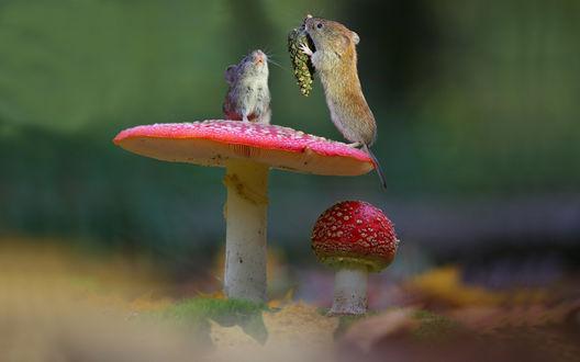Обои Два мышонка с шишкой, на шляпке большого мухомора, под шляпкой мухомор поменьше, фотограф Вадим Трунов