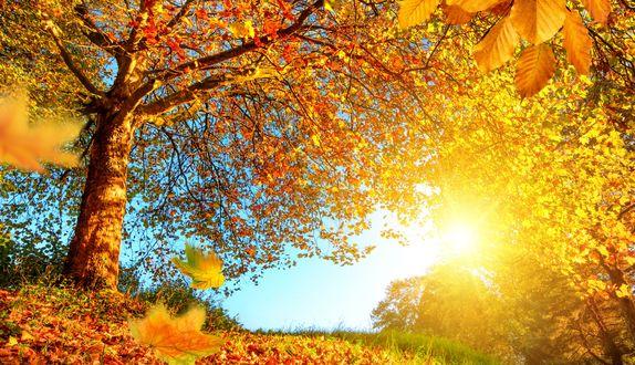 Обои Яркое солнце освещает лес с желтой осенней листвой