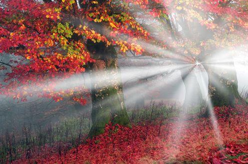 Обои Лучи солнца пробиваются сквозь осеннюю листву, Карпаты, Украина