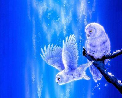 Обои Сидящая на ветке и летящая совы, в синих тонах