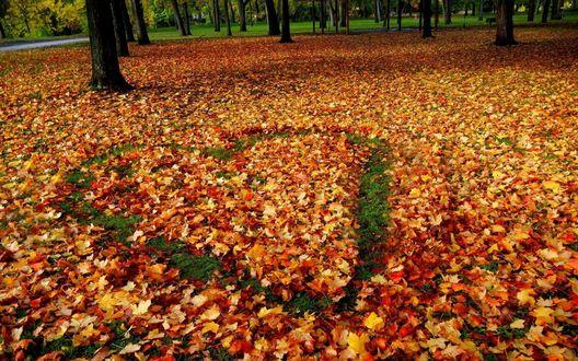 Обои Сердце, нарисованное на осенней листве