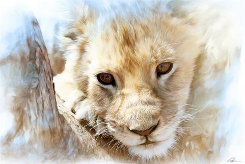 Обои Львица прячется за деревом, художник Paul Miners