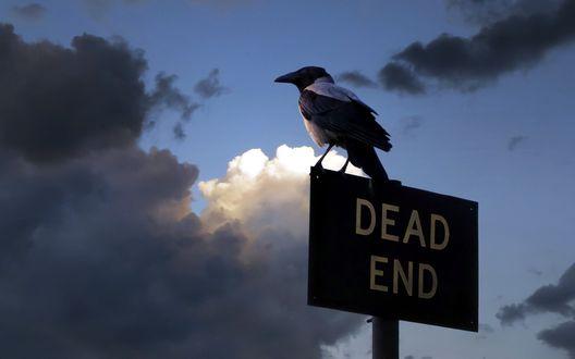 Обои Сорока сидящая на дорожном знаке с надписью тупик / DEAD END