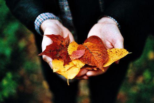 Обои Парень держит в руках осенние листья