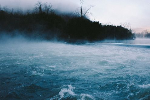Обои Море в туманном лесу