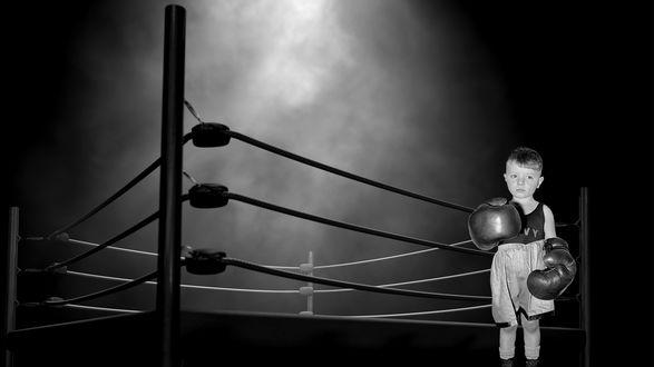 Обои Маленький боксер в больших перчатках на фоне ринга
