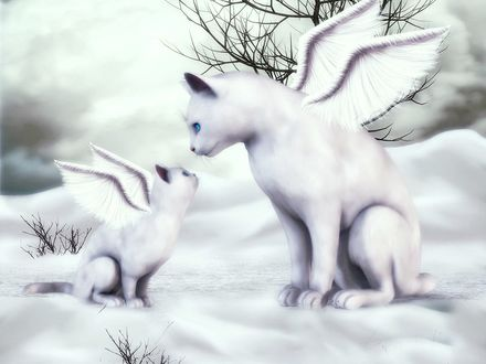 Обои Белая кошка-ангел, белый котенок -ангел сидят на снегу и смотрят друг другу в глаза