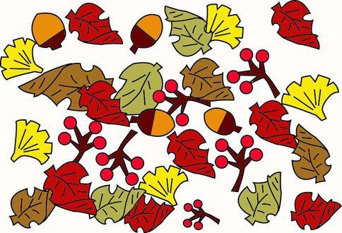 Обои Осенние листья и желуди на белом фоне