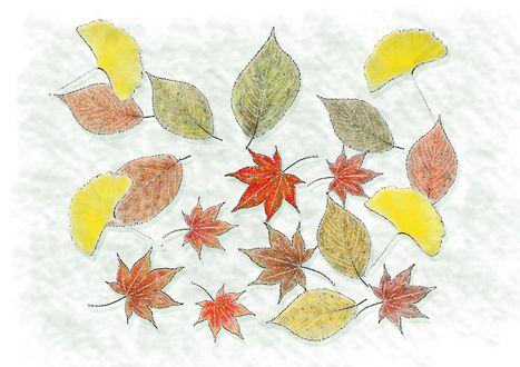 Обои Осенние листья на белом фоне