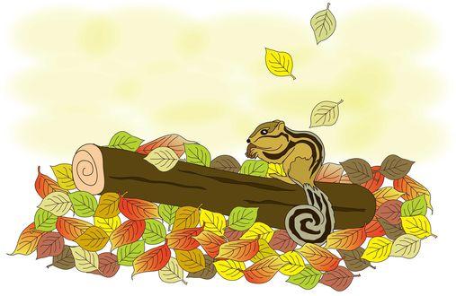 Обои Бурундук сидит на бревнышке с орехом в лапках на фоне осенних листьев