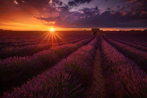 Обои Закат солнца над лавандовым полем