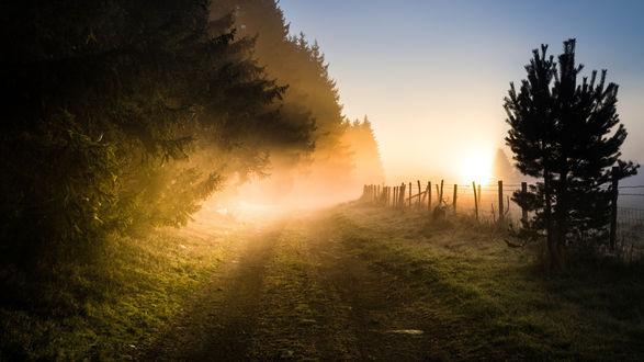 Обои Дорожка у леса ведущая в утренний туман