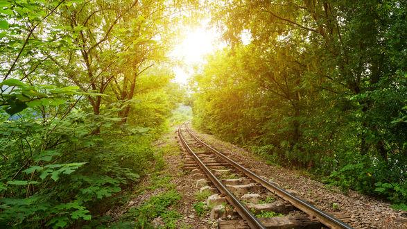 Обои Железная дорога проходящая через летние деревья