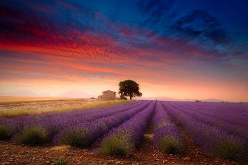 Обои Лавандовое поле на закате, by Giovanni Allievi