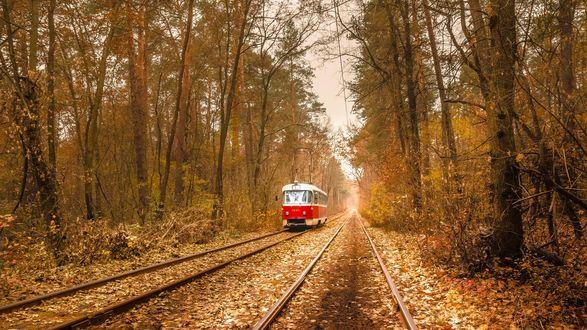 Обои Трамвай на рельсах в осеннем лесу