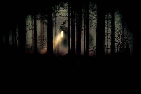 Обои Свет из страшного дома, виднеющегося среди деревьев в лесу