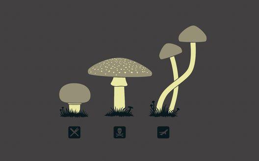Обои Типы грибов: Съедобные Ядовитые и Смертельные