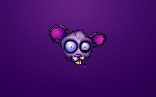 Обои Забавное изображение крысы