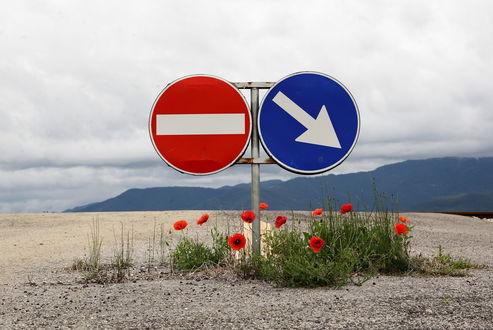 Обои Цветы и дорожные знаки рядом с ними (Проезд запрещен и Объезд справа)