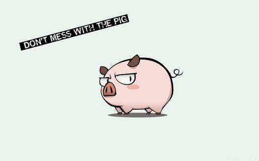Обои Забавная свинья и надпись Dont mess with the pig / Не связывайся со свиньей