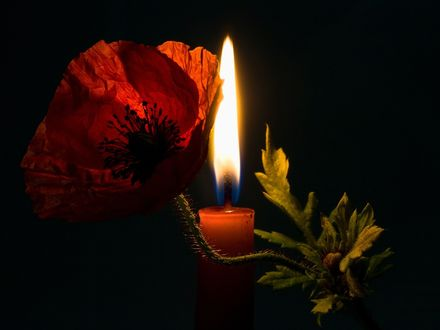 Обои Мак и горящая свеча в темноте